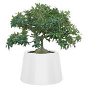 SARDANA Vaso: iluminar suas flores com este pote exterior generoso! - QUI EST PAUL